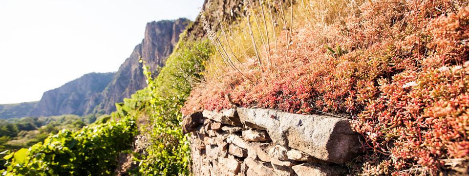 Sie können Ihre Weinreise an der Nahe auf ganz unterschiedliche Art und Weise gestalten.