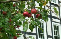 Sauerland: 10 Sehenswürdigkeiten und Ausflugsziele