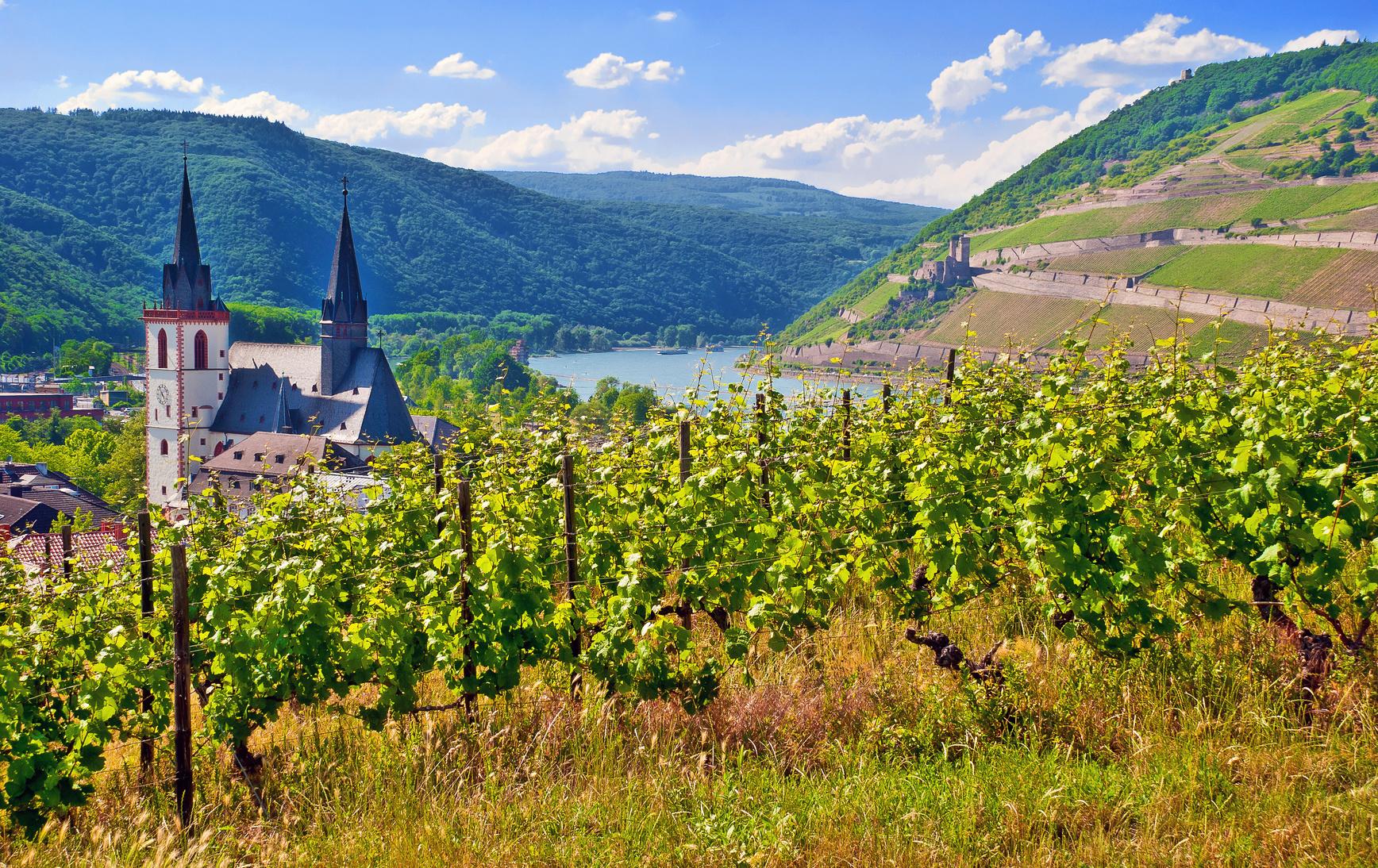 Die Pfalz-herrliche Gegend- leckerer Wein- Gemütlichkeit
