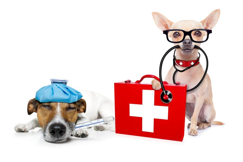 Wenn man die Reiseoptheke für seinen Hund dabei hat, ist das schon die halbe Miete, wenn doch was geschieht