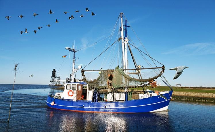 Leckere Fische, zB Krabben ein kulinarischer Genuss im Ostseeurlaub