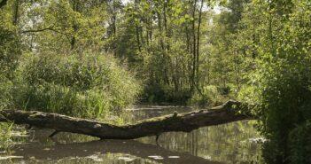 Zelten im Spreewald: Camping mit Kindern