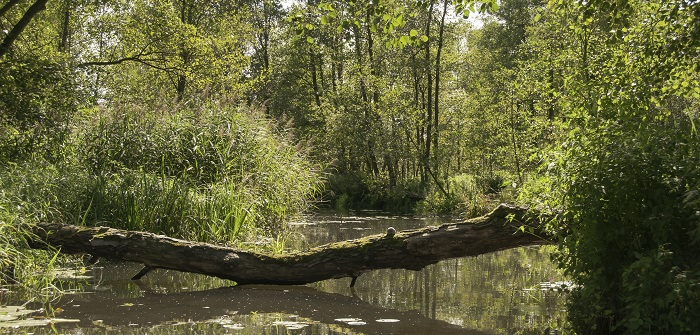 Spreewald single mit kind - Kinderurlaub in Brandenburg