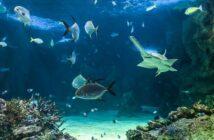 Das Aquarium in Hamburg – Erlebnisse für die ganze Familie