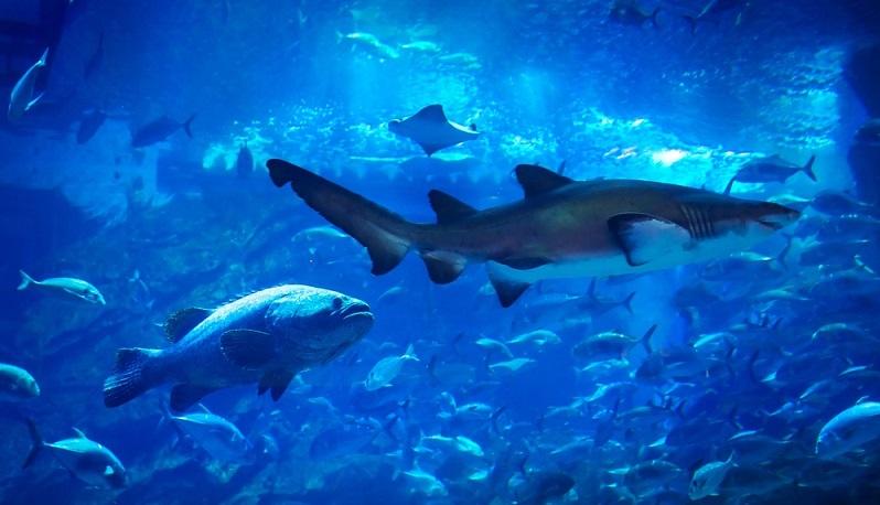 Das Tropen- Aquarium ist mehr als nur eine Ansammlung an Fischen aus der ganzen Welt. Hier wurde mit viel Liebe zum Detail gearbeitet. Durch die artgerechte Gestaltung und die vielseitigen Stationen ist für jeden etwas mit dabei. Auch jüngere Kinder kommen auf ihre Kosten, weil sie immer wieder die Möglichkeit haben, sehr nah an die Tiere heranzutreten und sie genau beobachten zu können. (#02)