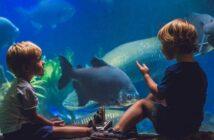 Aquarium in Hamburg – das darf man sich nicht entgehen lassen
