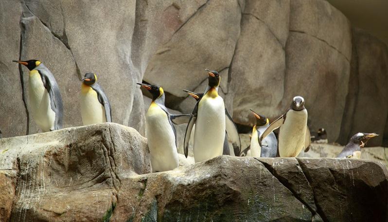 Das Aquarium in Hamburg ist ein Muss! Wer nach Hamburg fährt, sollte sich einen Be-such im Aquarium des Tierpark Hagenbeck auf keinen Fall entgehen lassen. Denn hier kann man außergewöhnliche und seltene Tropenfische bestaunen – auch für Kinder sehr interessant! (#03)