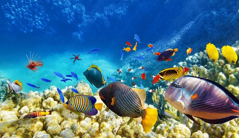 Insgesamt leben in dem riesigen Aquarium in Hamburg rund 14.300 teils exotische oder gefährdete Tiere – im Wasser, in Höhlen und an Land. Das Aquarium wurde in Anlehnung an die Ideen der Familie Hagenbeck zur artgerechten Haltung der Tiere gestaltet. (#02)