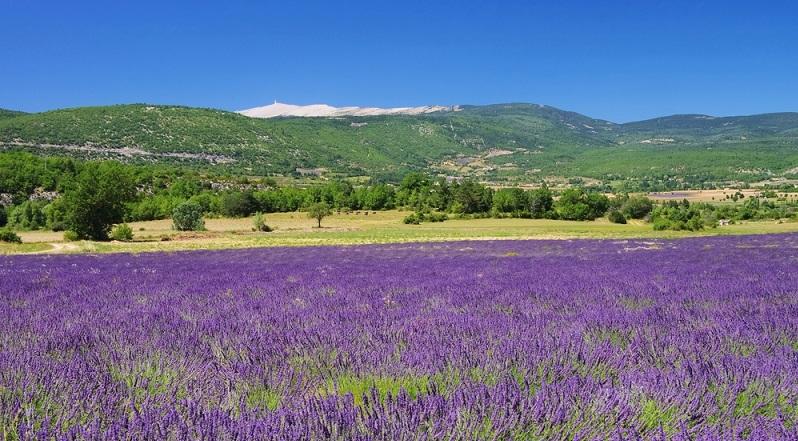 Der Mont Ventoux ist bereits von weitem sichtbar: Mit nahezu 2000 Metern ragt er sich in der Provence, im Department Vaucluse, in den Himmel und bietet dabei Besuchern einen erstaunlichen Anblick.