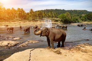 Vielfältig und paradiesisch schön ist auch Sri Lanka. (#08)