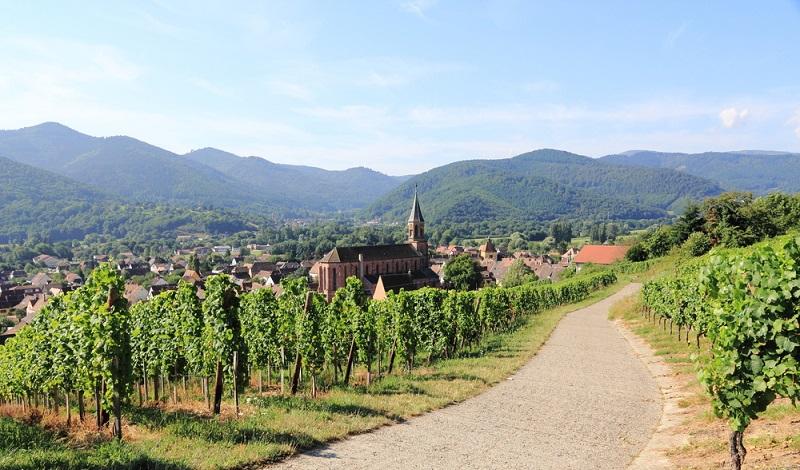 Eine traumhafte Tour entlang den Weinbergen und mit dem Blick auf Vogesen-Gipfel. (#1)