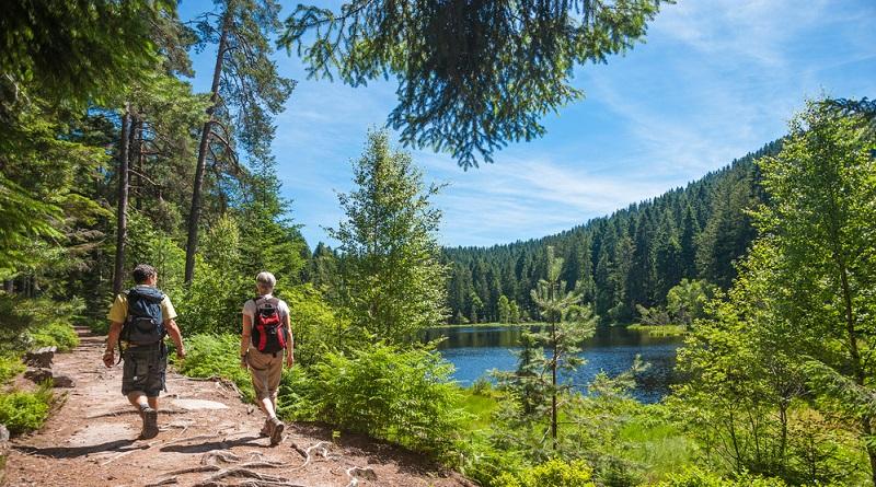 Die schönsten Wanderwege entdecken Wandern durch den uralten Schwarzwald mit alten Bäumen und Schluchten