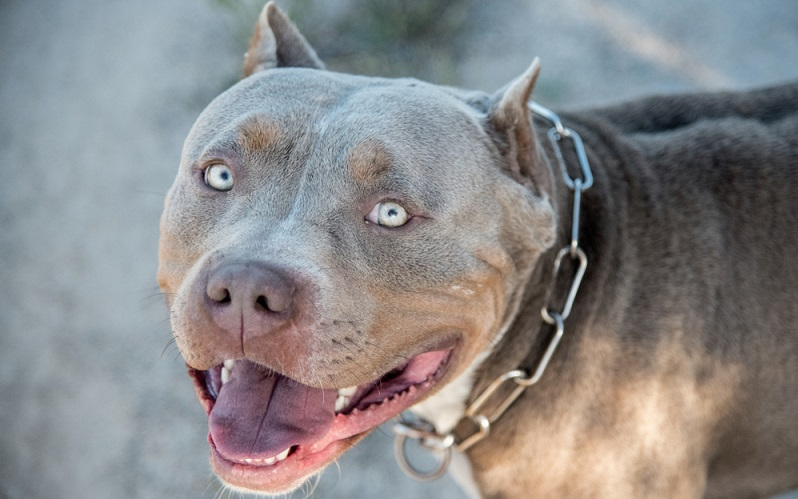Die obigen Ausnahmen zur Anleinpficht auf ausgewiesenen Freiflächen gelten ausdrücklich nicht für gefährliche Hunderassen gemäß Hamburger Hundegesetz.