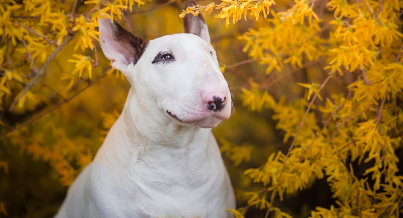 Natürlich gilt das Hamburger Hundegesetz nicht nur für einheimische Tiere, sondern auch für Vierbeiner, die in Begleitung ihrer Besitzer Urlaub in der Hansestadt machen.