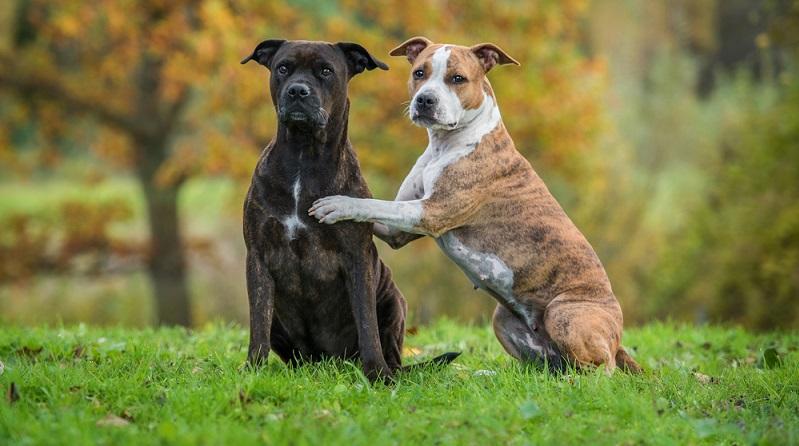 Das Hundegesetz sowie die dazugehörige Durchführungsverordnung (HundeGDVO) sind in Hamburg seit 2006 maßgeblich für alle Fragen der Hundehaltung.