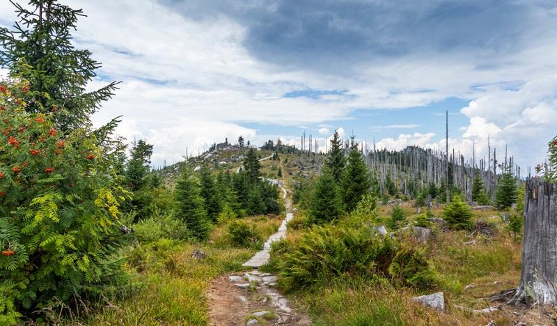 Diese traumhafte Trail-Strecke führt hinauf zum Dreisessel und zum idyllischen Plöckensteinsee.( Foto-Shutterstock  Sergey Fedoskin)