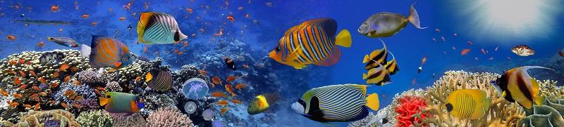 Sehr hübsch sind die bunten Fische, die sich im Korallenriff zeigen.  ( Foto: Shutterstock-Vlad61)