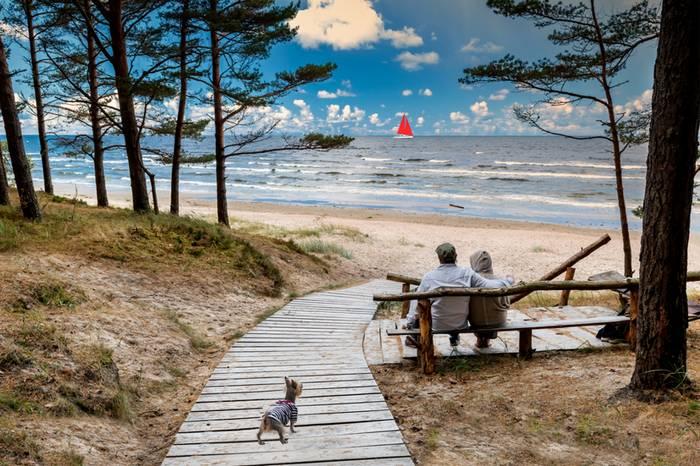 Am Strand der ostsee fühlt sich der Hund pudelwohl. (Foto: shutterstock - Sergei25)